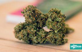 Magu CBD Neubau Marihuana Canabis