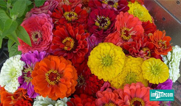 Blumen_Brigitte_Beitragsbild